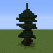 Spurce Tree 2