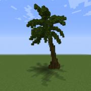 Tall Palm Tree 2